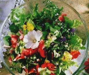 Salata sa cvećem