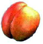 Kolač od nektarina