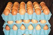 Pohovana jaja