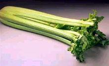 Salata od barenog celera
