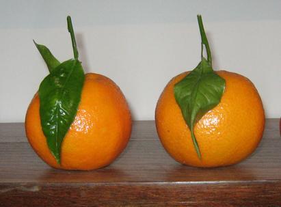 Narandža – lek za leto i zimu