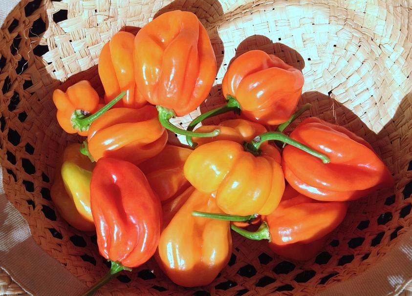 Paprika i njen značaj