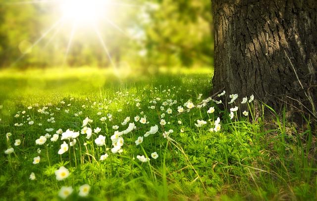 foto: Pixybay.com