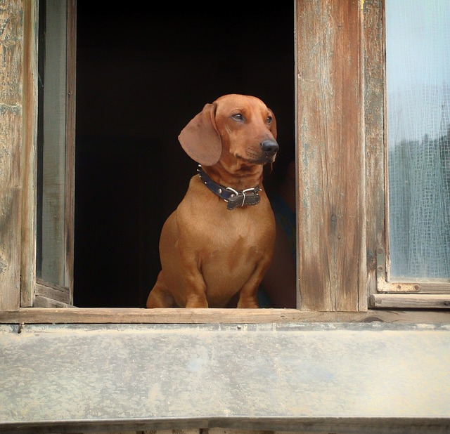 Kućica za psa