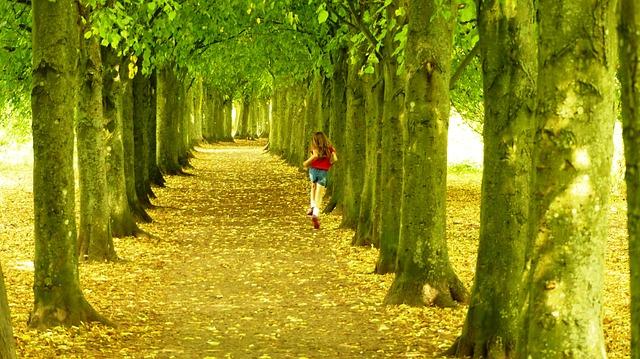 trees-379462_640