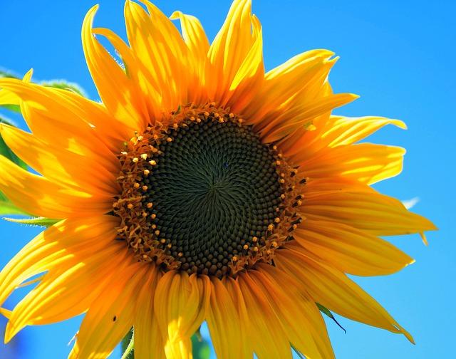 Foto: Bluesnap/Pixabay.com