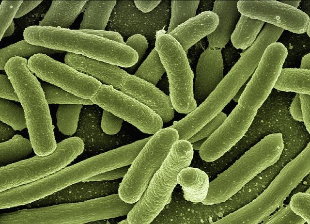 Kontaktni sportovi i superbakterije