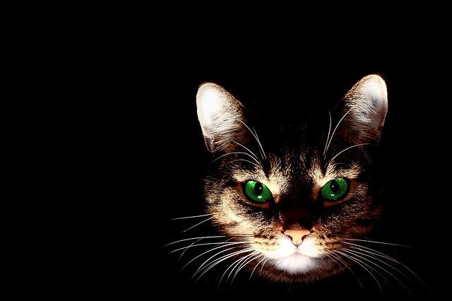 cat-606532_640