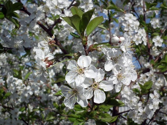 Proleće je zdravo