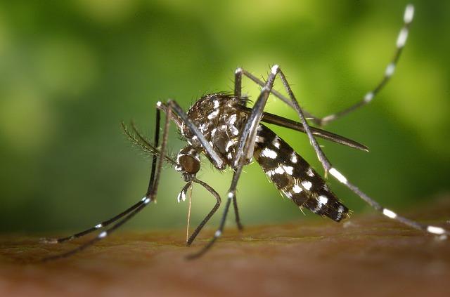 Pažnja: vrebaju nas ZARAŽENI komarci!
