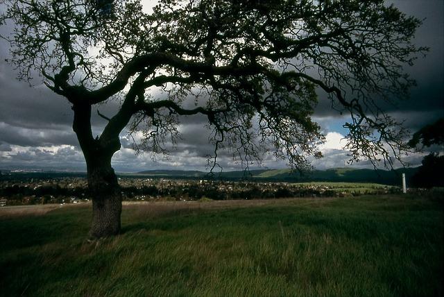 Star 600 leta: Protekle noći posečen hrast u selu Savinac