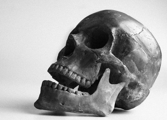 Francuska učenica pronašla zub star 560.000 godina