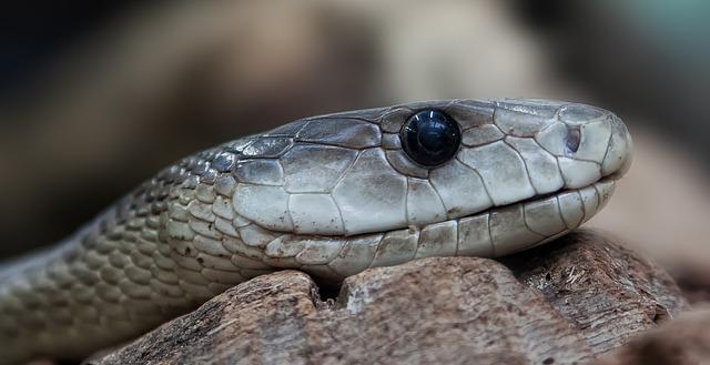 Pronađen fosil zmije sa četiri noge