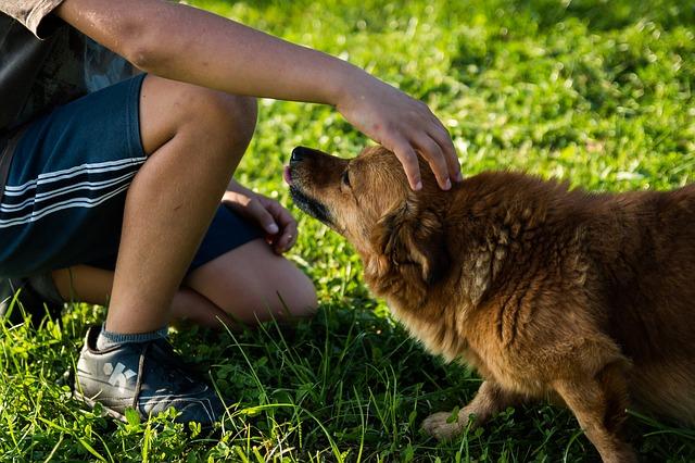 Proizvodnja vrhunske kozmetike za pse u Srbiji