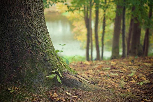 Verovanja: Ne sadite ih u svom dvorištu, ovo drveće donosi smrt i izaziva strah!