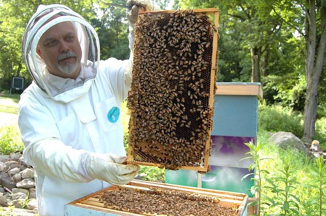 Novi i uznosan biznis: Srpski pčelari otkrili nešto mnogo vrednije od meda