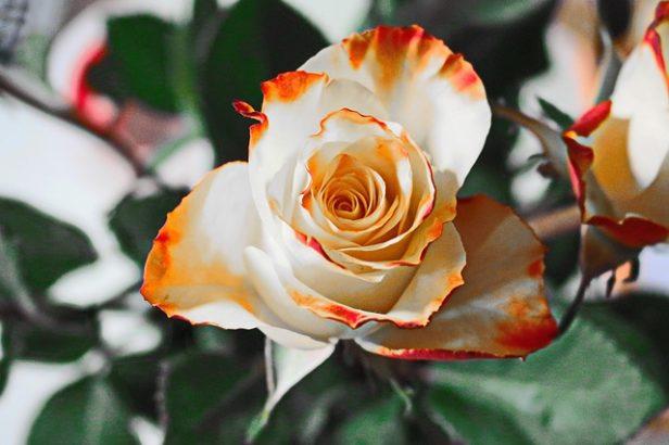 Foto: Peter_Hofheinz/Pixabay.com