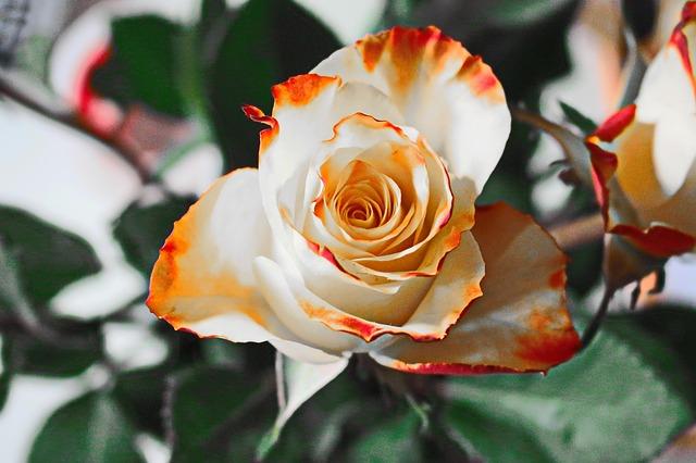 Poklonio vam je cveće – evo koju poruku vam šalje muškarac tim gestom