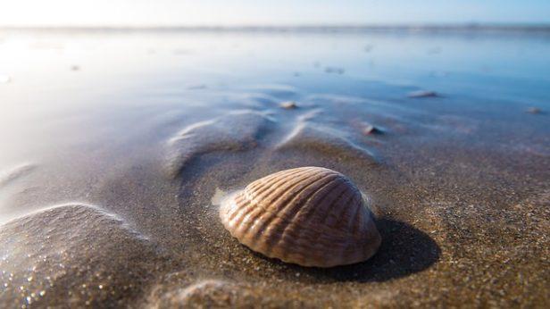 Foto: Unsplash/Pixabay.com