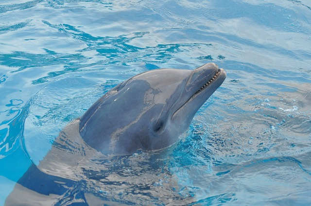 Delfini razgovaraju kao ljudi?