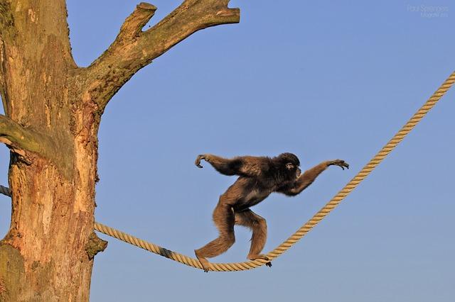 Kineska Nova Godina: godina vatrenog Majmuna