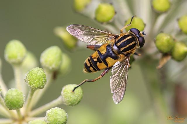 Naučno otkriće: Otrov pčela uništava agresivne ćelije raka dojke