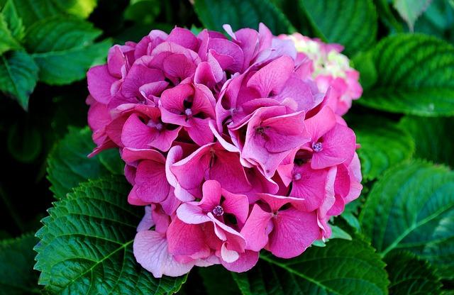 Imate u kući ove vrste cveća? Bacite ih – odmah!