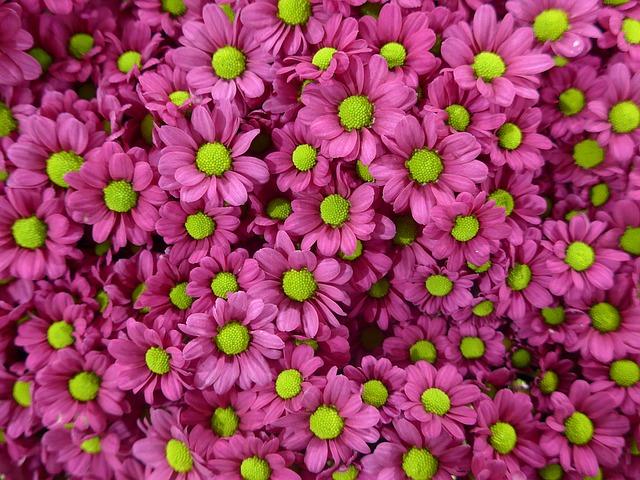 Vaš prolećni cvet (po horoskopu)