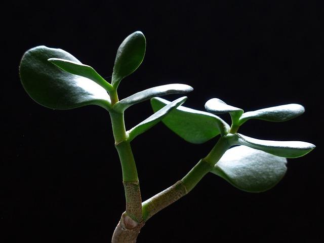 Sobne biljčice koje morate imati