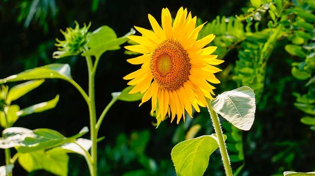 Prolećni cvet za najblistaviji znak