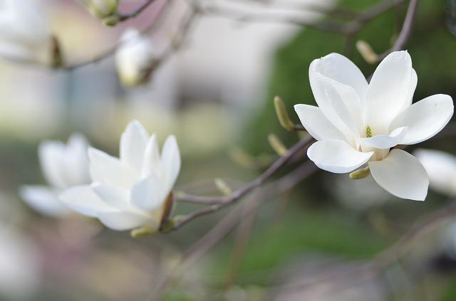 Prolećni cvet za najpraktičniji znak