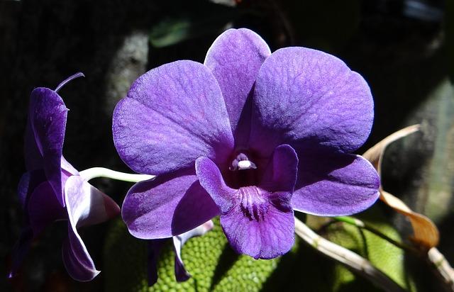 Odmah nabavite ove biljke: Teraju negativnu energiju i smiruju