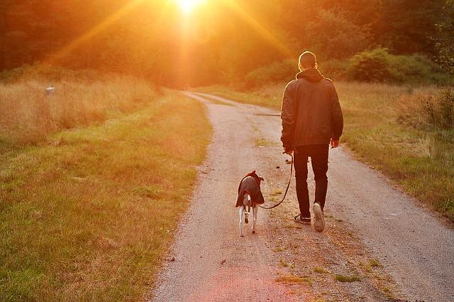 14 razloga zašto muškarci imaju pse a ne žene