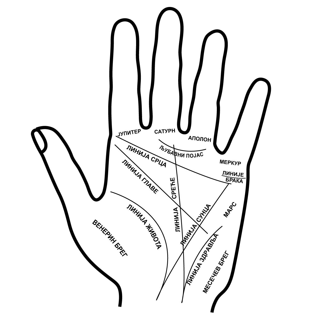 """Imate slovo """"M"""" na dlanu, evo šta to otkriva o vašoj sudbini"""