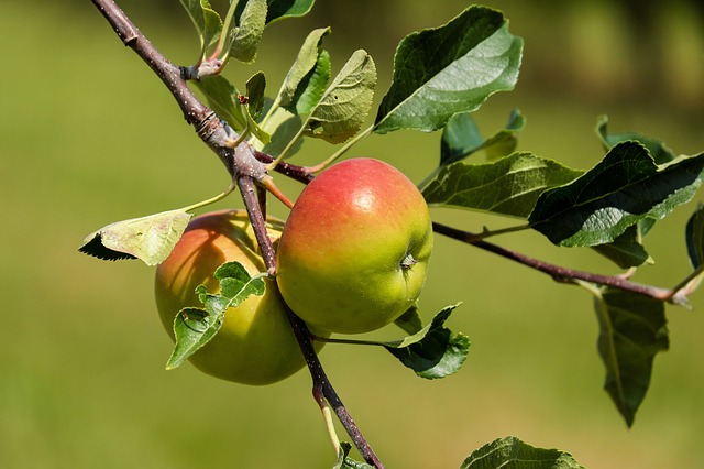 Nećete verovati šta sve leči jabukovo sirće