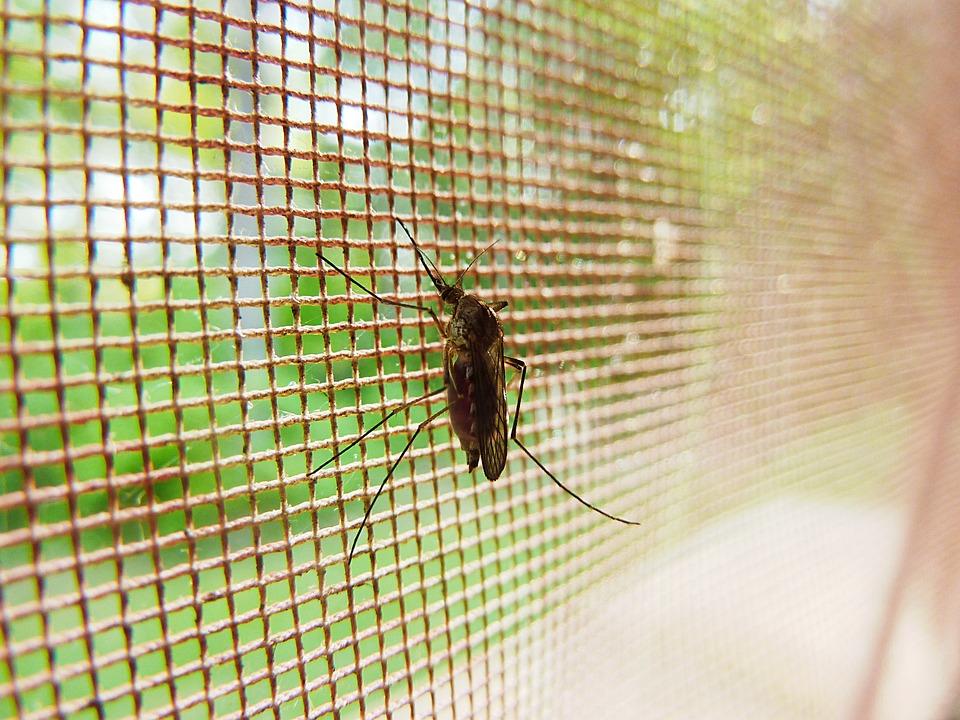 Hitno upozorenje: zaraženi komarci haraju prestonicom