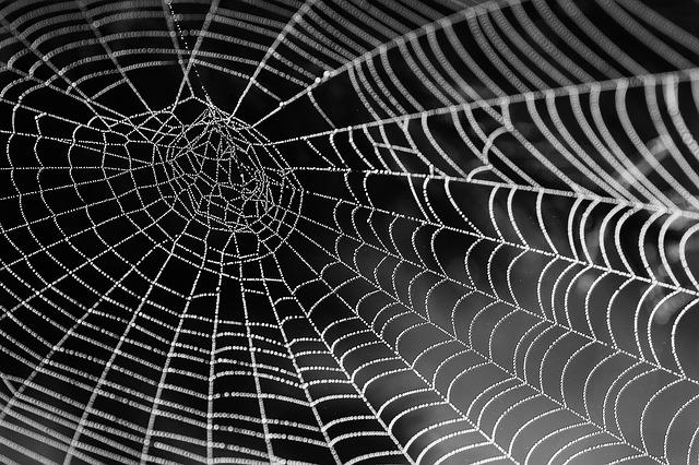 Fenomen u Grčkoj: Paukova mreža dugačka 300m