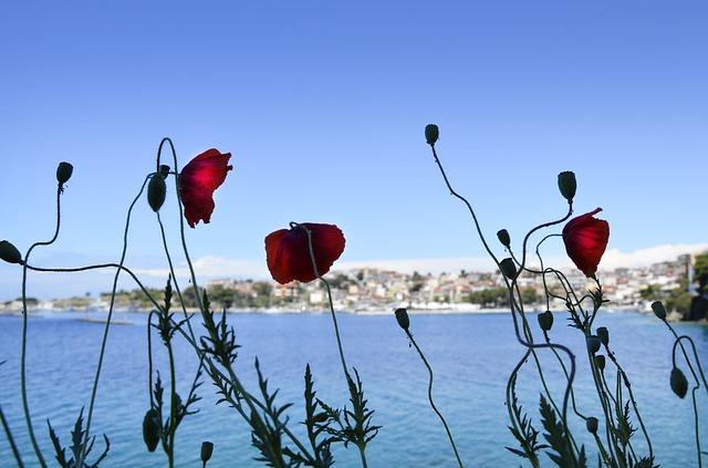 Poskupljuje omiljena hrana srpskih turista u Grčkoj