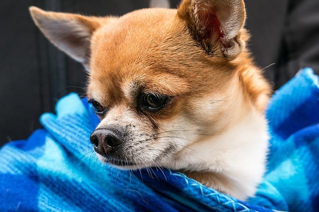 Izbacila muža iz kreveta zbog psa