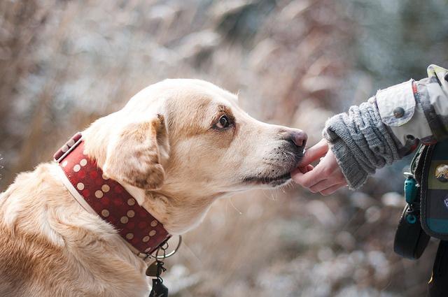 Ne zaboravite: Vaš pas treba da bude lepo vaspitan
