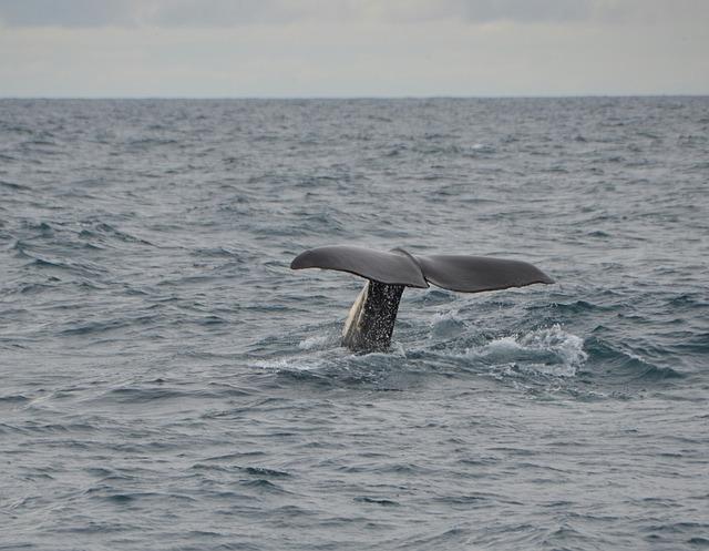 Grbavi kit naleteo na ribarski brodić, ima povređenih