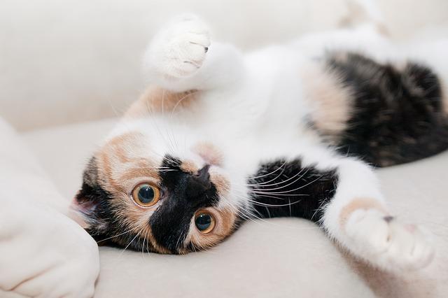 Danas je svetski dan mačaka
