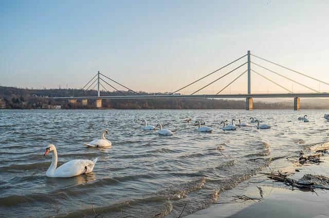 Rumun plivao od Švarcvalda do Novog Sada – cilj mu je Crno more!