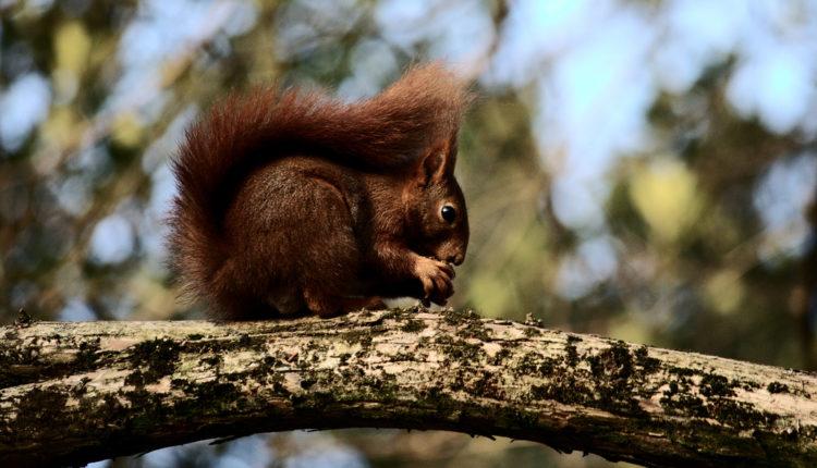 Monstruozna osveta: Istrenirala veverice da joj osakate bivšeg momka