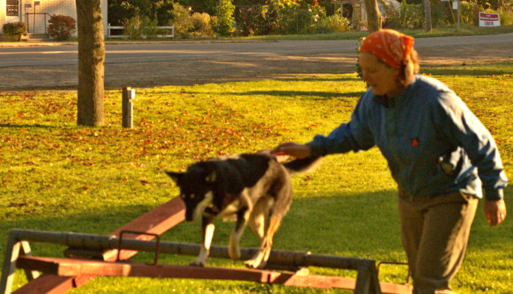 Otkrivamo kako se čuvanje psa odražava na životni vek vlasnika