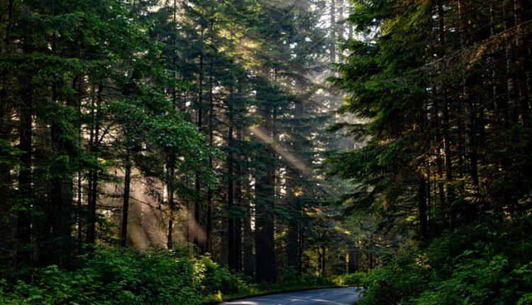 Pronađen obešen čovek u Zvezdarskoj šumi