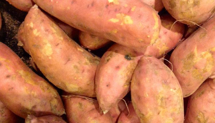 Ruski naučnici uzgajaju krompir otporan na hladnoću
