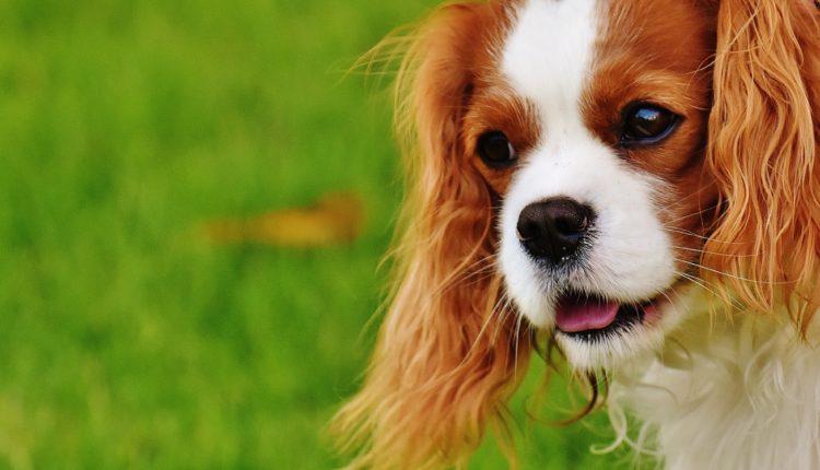 Sjajna vest za vlasnike pasa