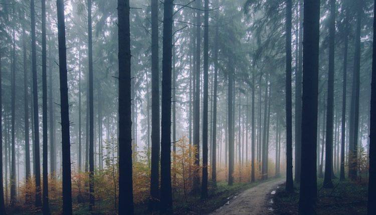 Jeziva šuma: Deca tamo nestaju bez traga