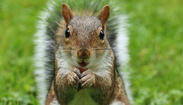 Monstrum drogirao vevericu iz sumanutog razloga